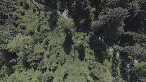 Aerial view of hiking trails in the forest Footage