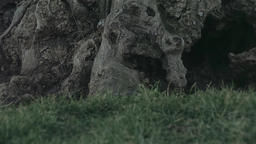 Close Up Of A Tree Trunk On A Meadow Live Action