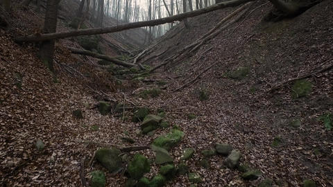 Aerial footage inside a forest between trees Footage