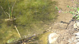 Small green frog jumps away slow motion Footage