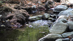 Small creek in quietness, loopable Footage