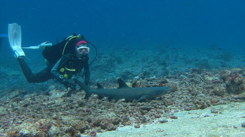 Fascinating underwater dive with sharks in the reef to Blue corner of Palau arch Footage