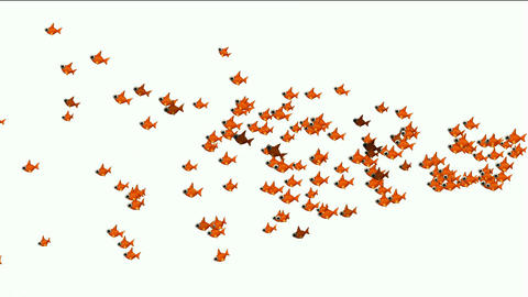 a group of cartoon goldfish Animation