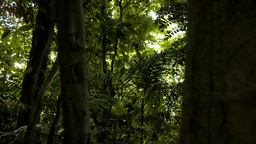 Sun through a Tropical Jungle - Tracking Shot Stock Video Footage