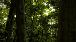 Sun through a Tropical Jungle - Tracking Shot Footage
