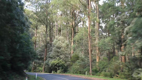 Fast driving through the forest Stock Video Footage