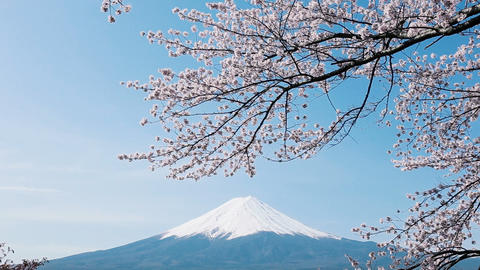Mt. Fuji with cherry blossom Footage