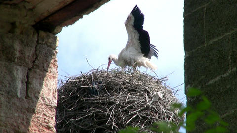 Stork on the Roof Stock Video Footage