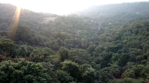 Deccan plateau 2, India, in winter. Eternal greenery Live Action