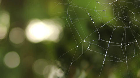Spider Web (3) Animation
