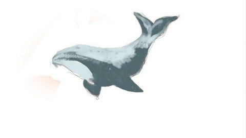 Digital drawing. We draw a killer whale. Time lapse Animation