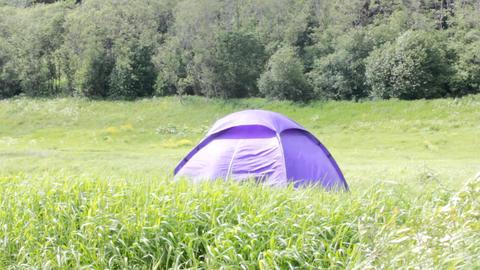 Blue tent set in meadow, at woodside Footage