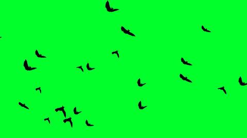 Flying Bats 10 Footage