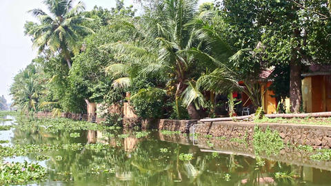 Motion along River with Water-plants by Palms in Tropics Footage
