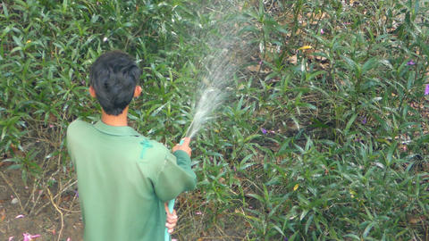 Gardener watering green plants Footage