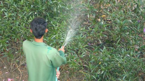 Gardener watering green plants Footage
