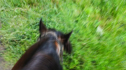 along path on a horse ride in a forest Footage