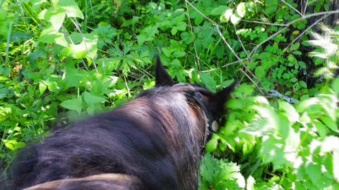 horse at rest is fed in forest Footage