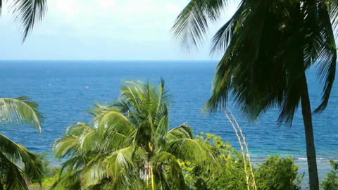 tropical beach full of palm trees Footage