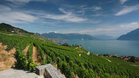 Vineyards of the Lavaux region Footage
