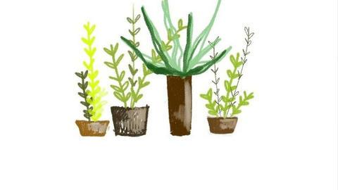 We draw a cactus. Digital drawing Videos animados