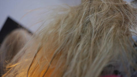 Hairdresser dries the hair dryer long hair charming young yellow-haired woman 84 Footage