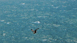 Seagull flying over the sea with rock cliffs yaylata kaliakra bulgaria Footage