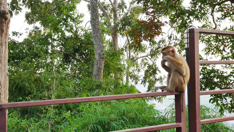 Life of monkey lived on the mountain in the country, Thailand. Waiting for food Footage
