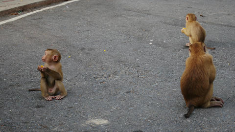 Life of monkey lived on the mountain in the country, Thailand. Waiting for food ビデオ