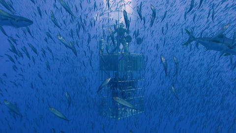 Gorgeous with diving off the island of Guadalupe in the Pacific ocean. Mexico Footage