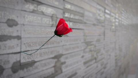 Red Rose In Memorial Footage
