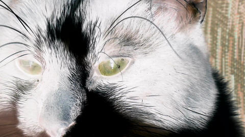 Cat Eyes with inversion filter Stock Video Footage