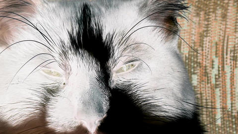 Cat Eyes with inversion filter, Live Action
