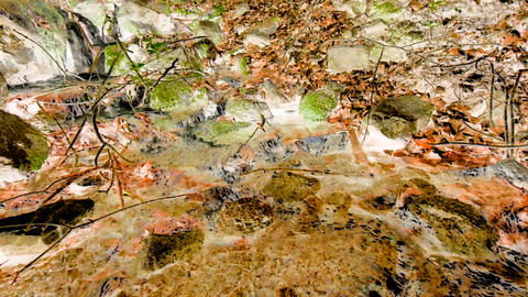 Small creek in forest with inversion filter Footage