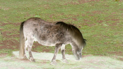 Grazing light brown pony with inversion filter Live Action