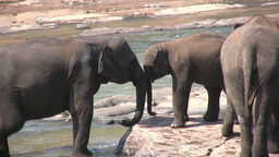 Mother elephant plays with her child Stock Video Footage