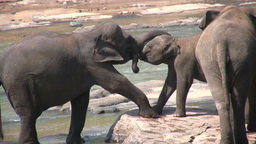 Mother elephant plays with her child Footage