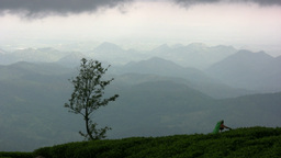 Beautiful tea plantations in Sri Lanka Stock Video Footage