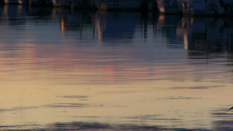 Drops of rain on the surface of the water Stock Video Footage