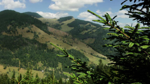 Spruce and summer mountains Stock Video Footage
