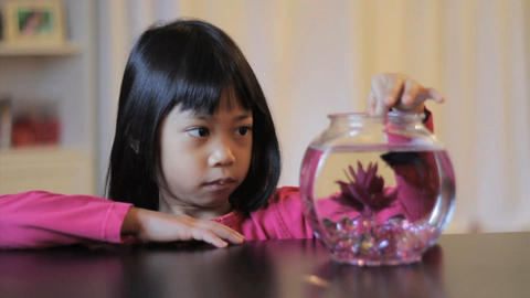 Asian Girl Feeds Her Red Betta Fish Footage
