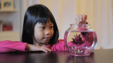 Asian Girl Feeds Her Red Betta Fish Stock Video Footage