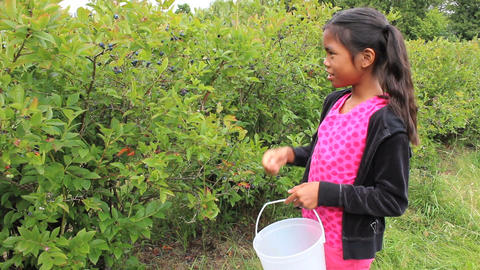 Asian Girl Picking Blueberries Stock Video Footage