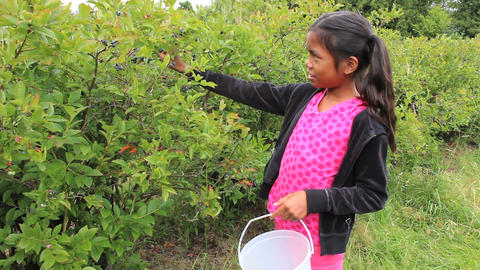 Asian Girl Picking Blueberries Footage