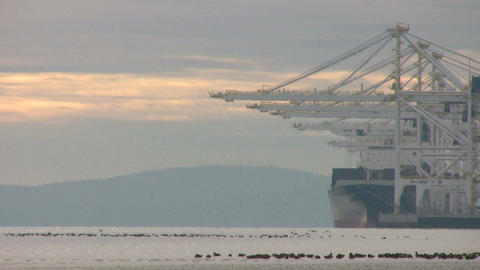Birds Take Flight At The Port Stock Video Footage