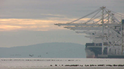 Birds Take Flight At The Port Footage