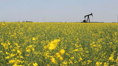 Canola Field And Oil Derrick Footage