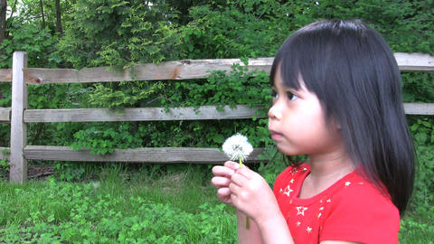 Dandelion Blowing War Stock Video Footage