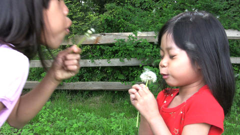 Dandelion Blowing War Footage
