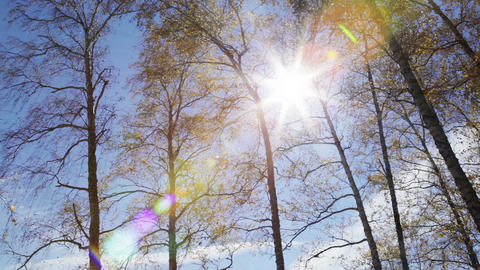 Sun rays through the autumn forest Stock Video Footage